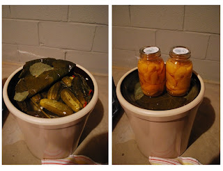 Pickle crock filled with yummy pickles!