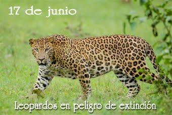 Animales en peligro de extinción..