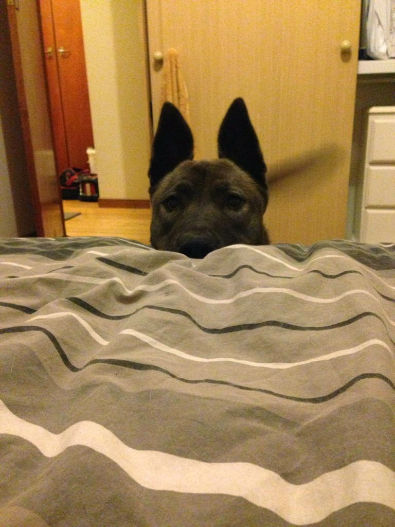 Cute dogs - part 22 (50 pics), funny dogs, dog pictures