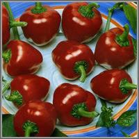 Сладкий перец сорт «Колокольчик»