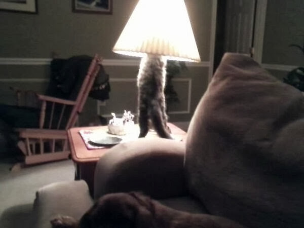 Funny cats - part 81 (40 pics + 10 gifs), cat pics, cat lamp