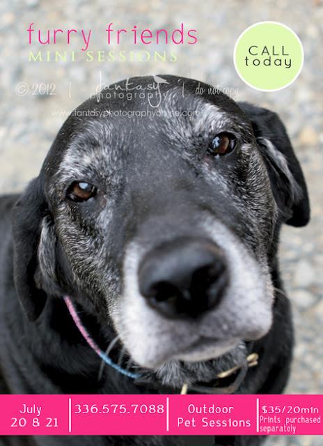 Winston Salem Dog Photographer | Pet Photography by Fantasy Photography, LLC
