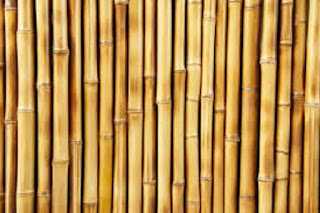 Bambù pianta da cui viene ricavato lo stelo per fabbricazione mobili