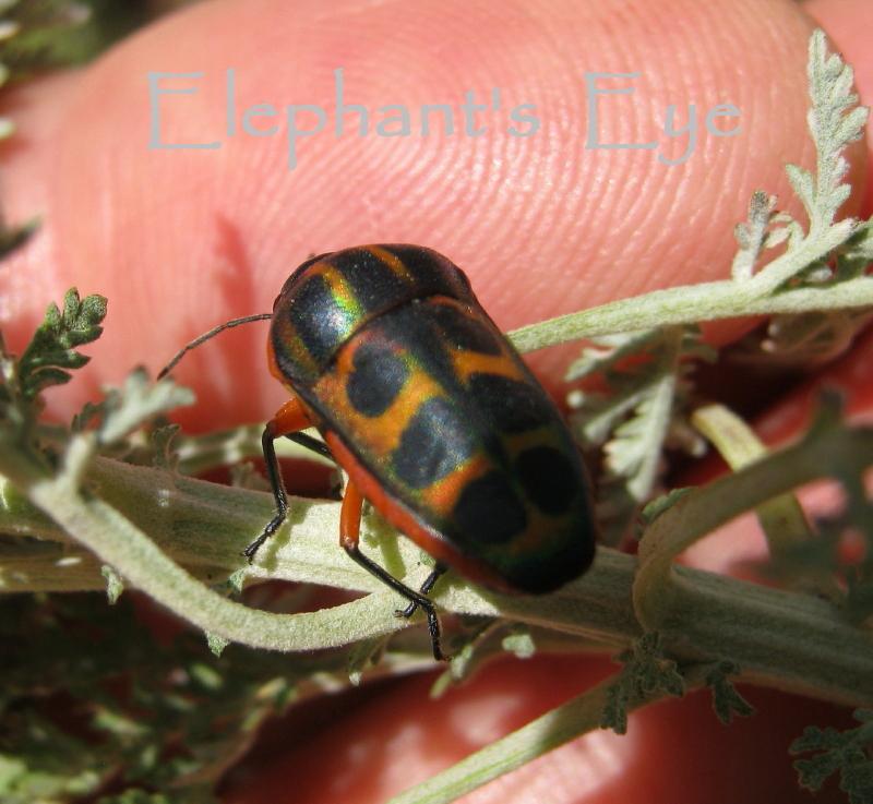 Natural Moth Repellent Essential Oil