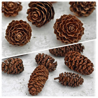 http://www.liveandlovecrafts.com/wood-natural-embellishments/1055-larch-cones.html