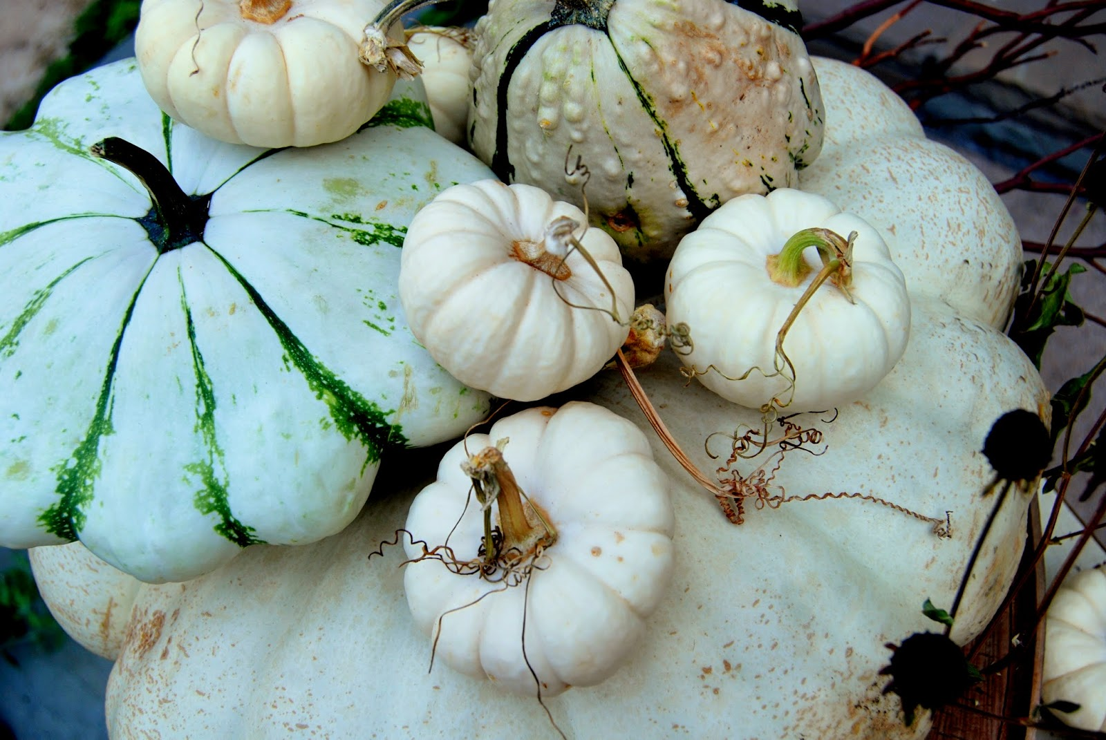 Ghostly White Pumpkins 6