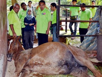 kuda mati di zoo melaka, kuda diracun di zoo melaka, beruang matahari dan kuda mati di zoo melaka, zoo melaka,gambar beruang matahari,gambar zoo melaka, keindahan zoo melaka,zoo melaka fees,basket diracun,dr zubaidah kamarudin,gambar zoo malaysia