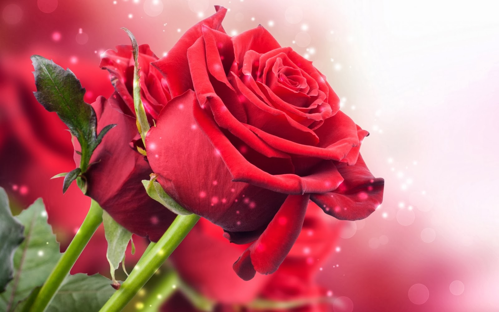 Beautiful_roses-image-for-wishing-friends-and-family-Template-card.jpg