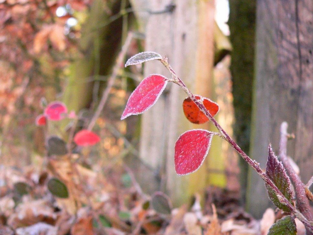 Winter Weihnachten Eis Blätter eisig draußen