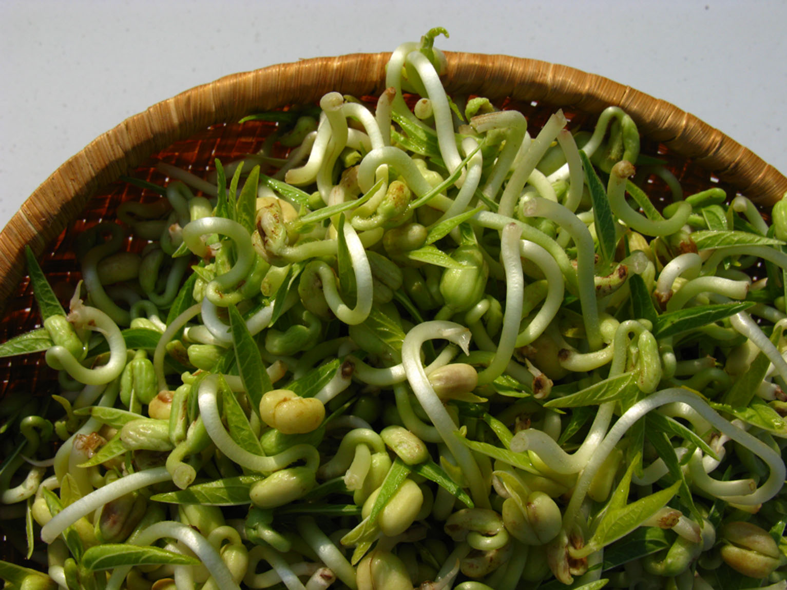 germinated bean sprouts