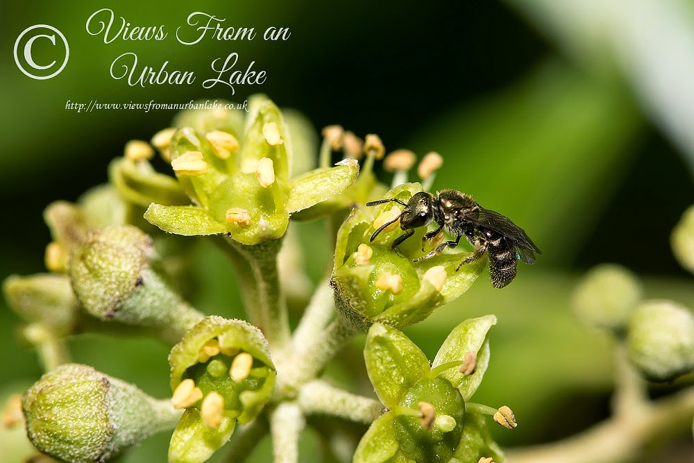 Unknown Wasp - Old Wolverton, Milton Keynes