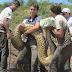 Cobra de mais de 6 metros em MT
