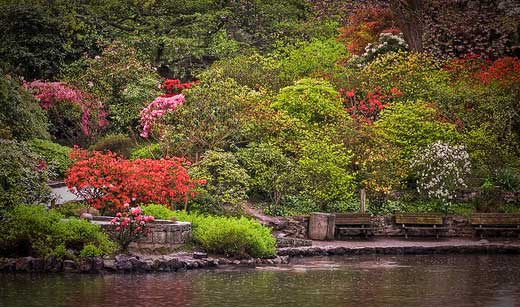 Never a Niche Travel Oregon Crystal Springs Rhododendron
