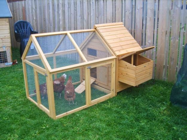 Build a chicken coop: steps and tips