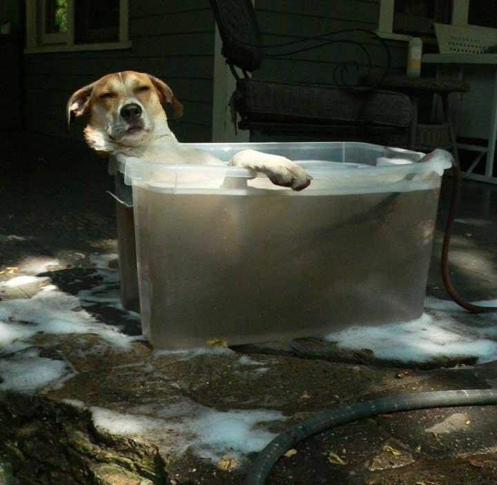 Cão em momento relax
