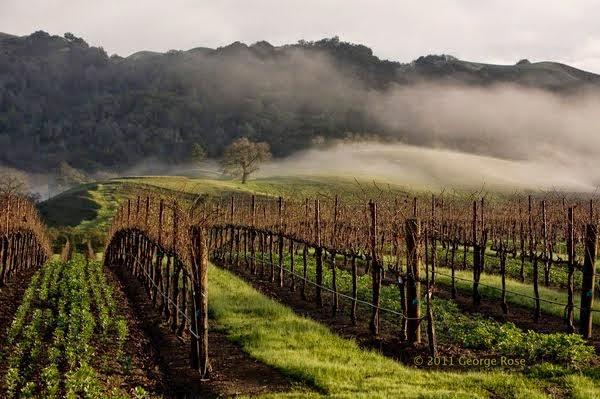Sonoma fog