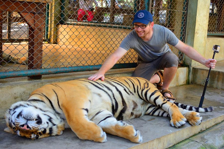 Tiger Kingdom w Chiang Mai