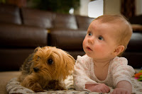 dogs facilitate learning in children