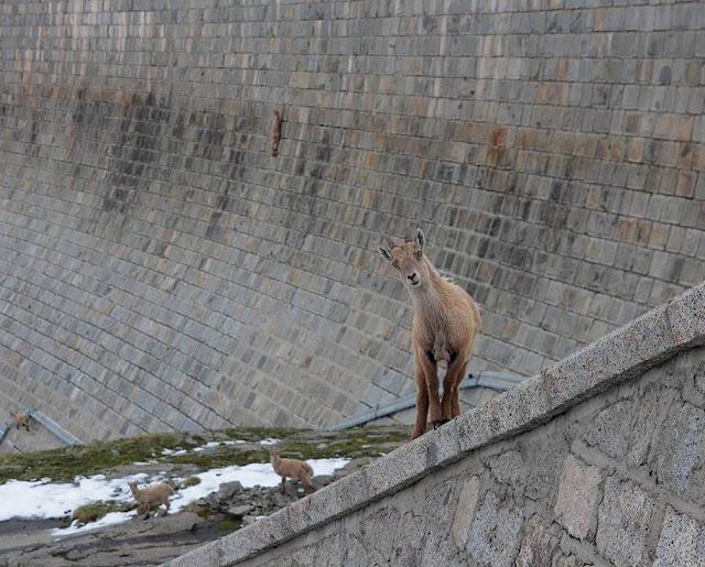 Diga del Cingino dam in Italy
