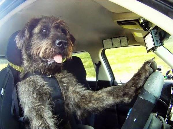 Autoescuela para Perros en Nueva Zelanda
