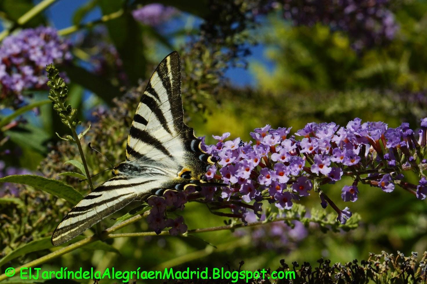 El jard n de la alegr a poda del arbusto de las for Jardin hamel 2015