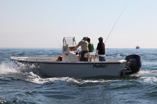 Boston fly fishing and report montauk ny for Montauk ny fishing