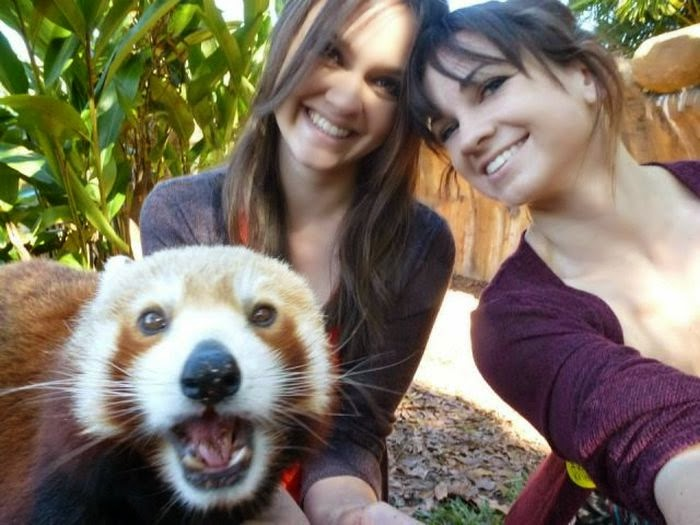 40 Adorable red panda pictures (40 pics), red panda takes a selfie with two women