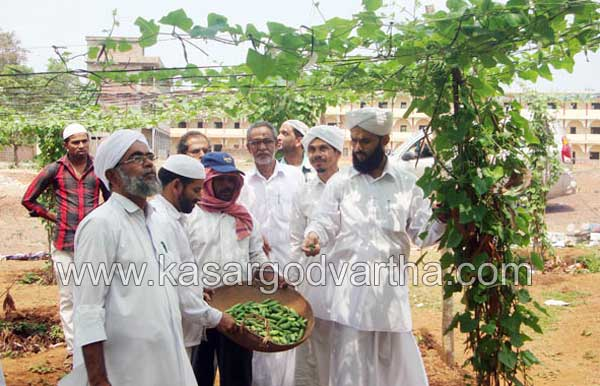 Green Muhimmath, Puthige, Vegetable, Kasaragod, Kerala, Malayalam news, Kasargod Vartha, Kerala News, International News, National News, Gulf News, Health News, Educational News, Business News, Stock news, Gold News