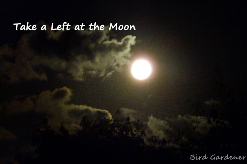 Take a Left at the Moon