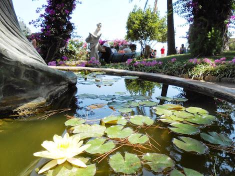 Ninfea, Giardini di Augusto