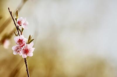 Escribe tu mensaje en esta postal de flores