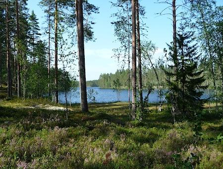 Heinäjärvi, Kannonkoski