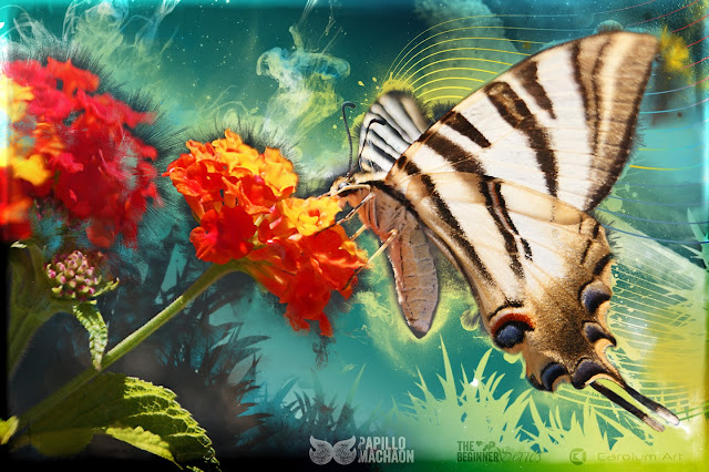 papilio-machaon-the-beginner-series-carolum-art