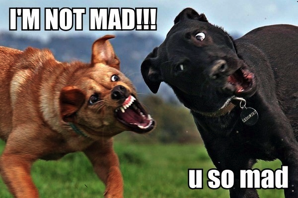 Funny Dogs Face - I'm Not Mad! - U So Mad!