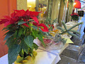 December Wears Red in Venice