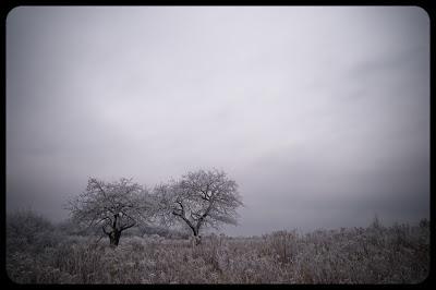 Jurajski Mróz. Fotografia zimowego krajobrazu. Niegowonice, jura krakowsko-częstochowska. fot. Łukasz Cyrus, Ruda Śląska.