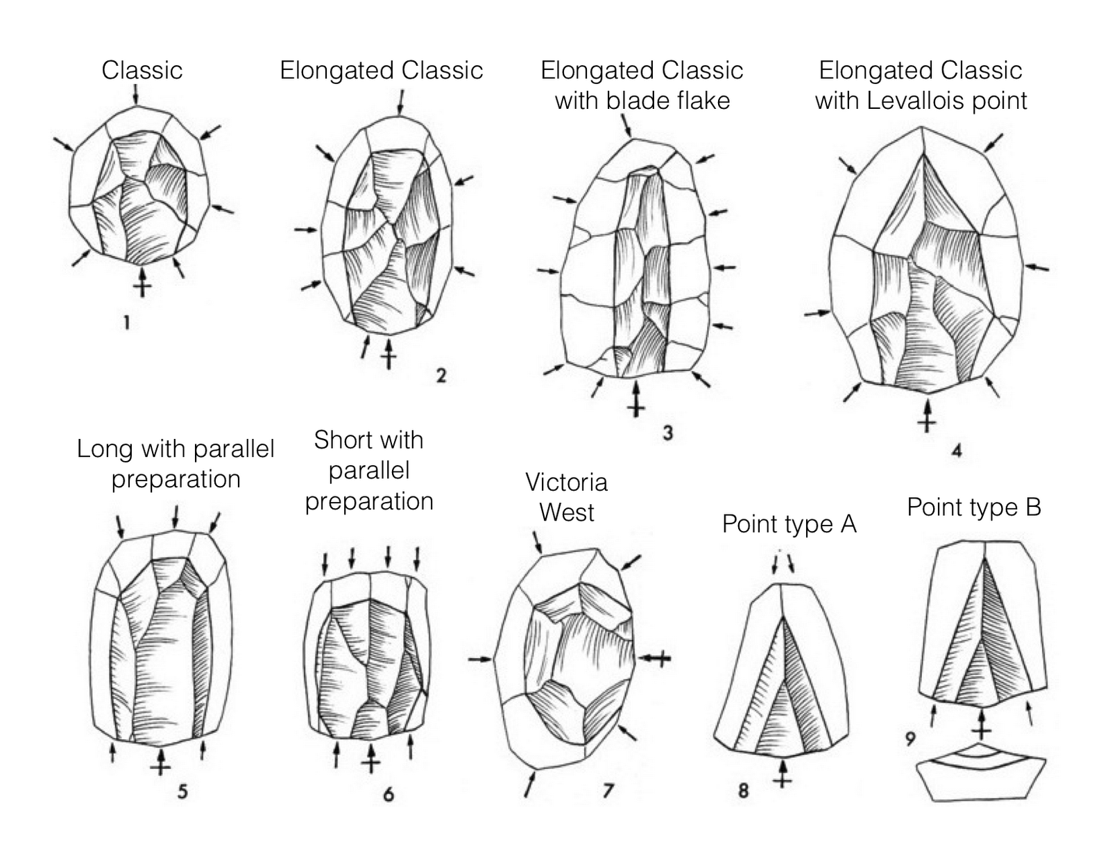 Levallois technique - Wikipedia
