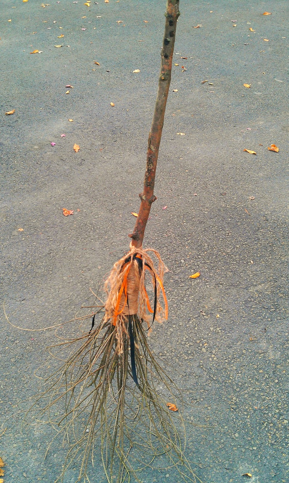 Witches Broom