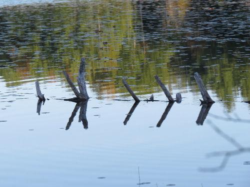 reflected log