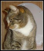 blog śmieszne koty: śpiące koty spiace koty