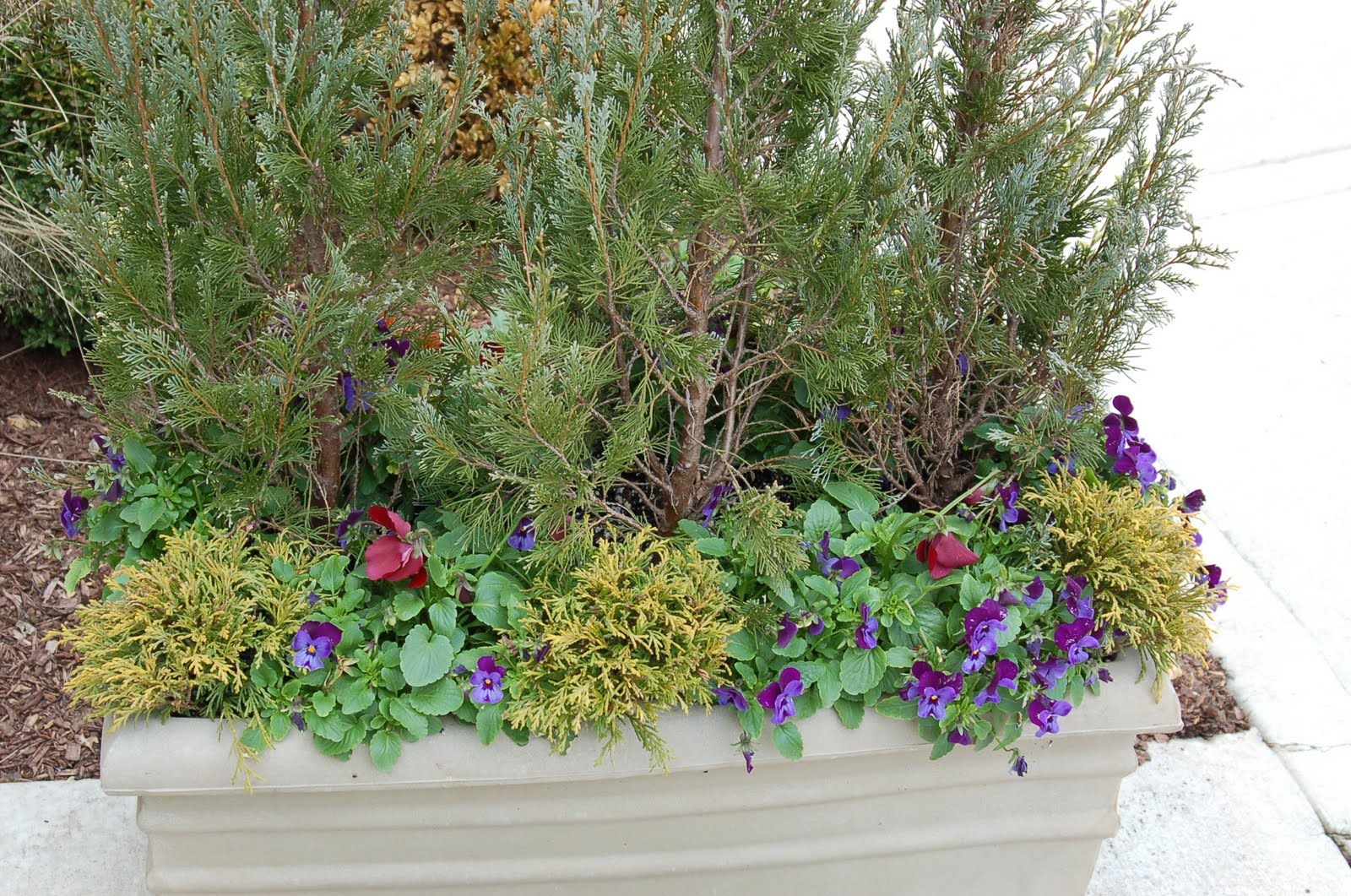 bwisegardening Fall Container Ideas