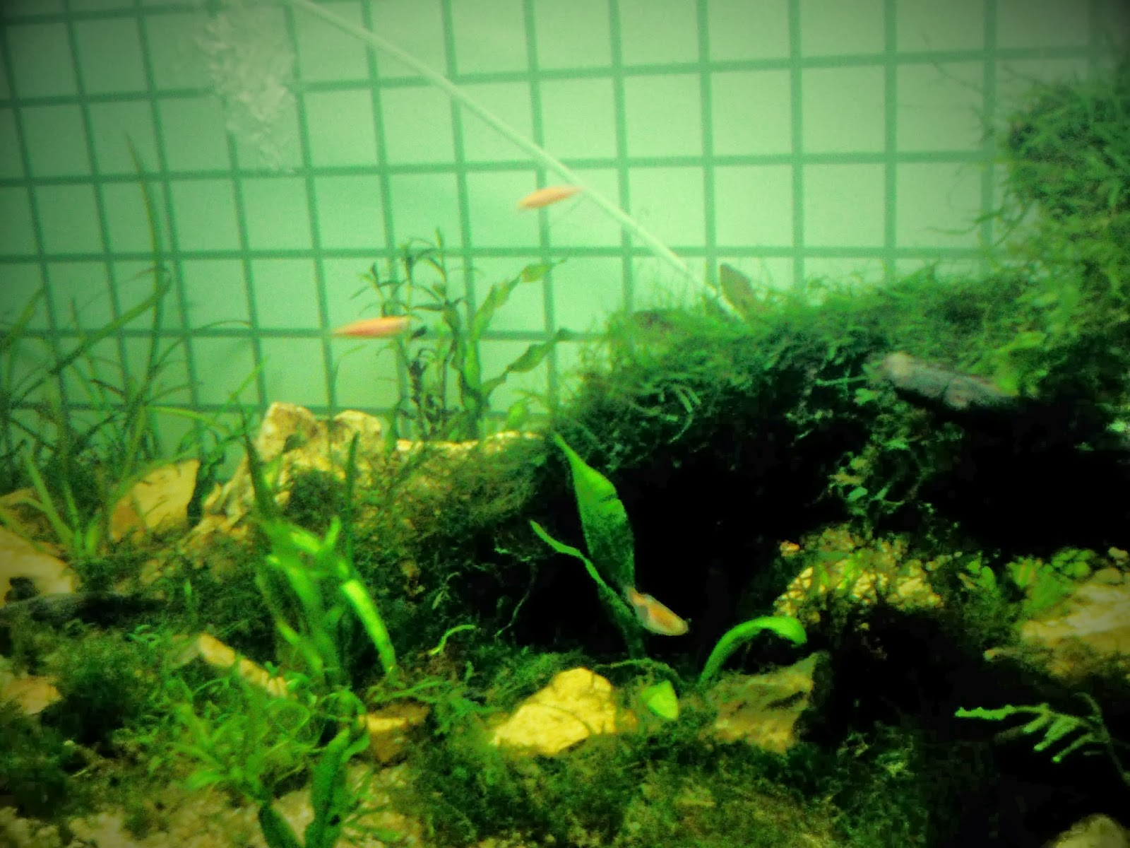 Aquascape & the Fish ~ Scenes from a memory™