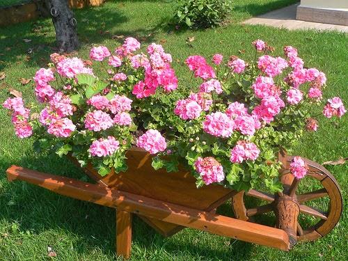rosas no jardim de deus:beleza das flores: Carriolas no jardim.