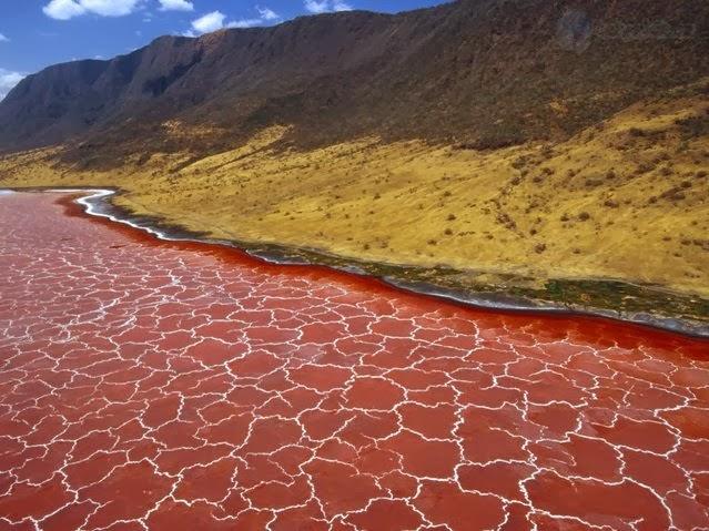 ANEH! Danau Ini bisa Membuat Hewan Jadi 'Batu' (FOTO)