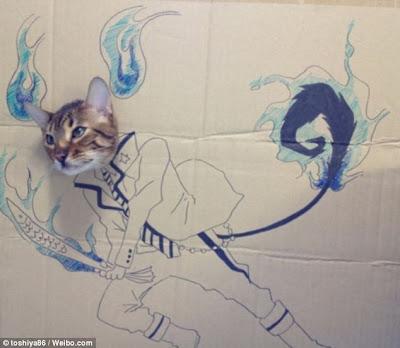 Kucing-kucing paling terkenal di internet (Gua Gua si kucing Costplay)