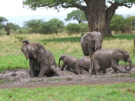 Elephant-mud-pack