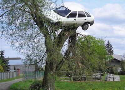 vecinos le ponen el auto sobre un arbol