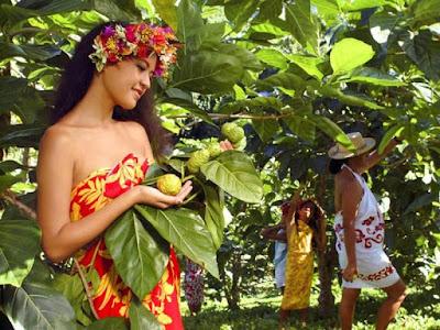 Manfaat buah mengkudu untuk kesehatan tubuh
