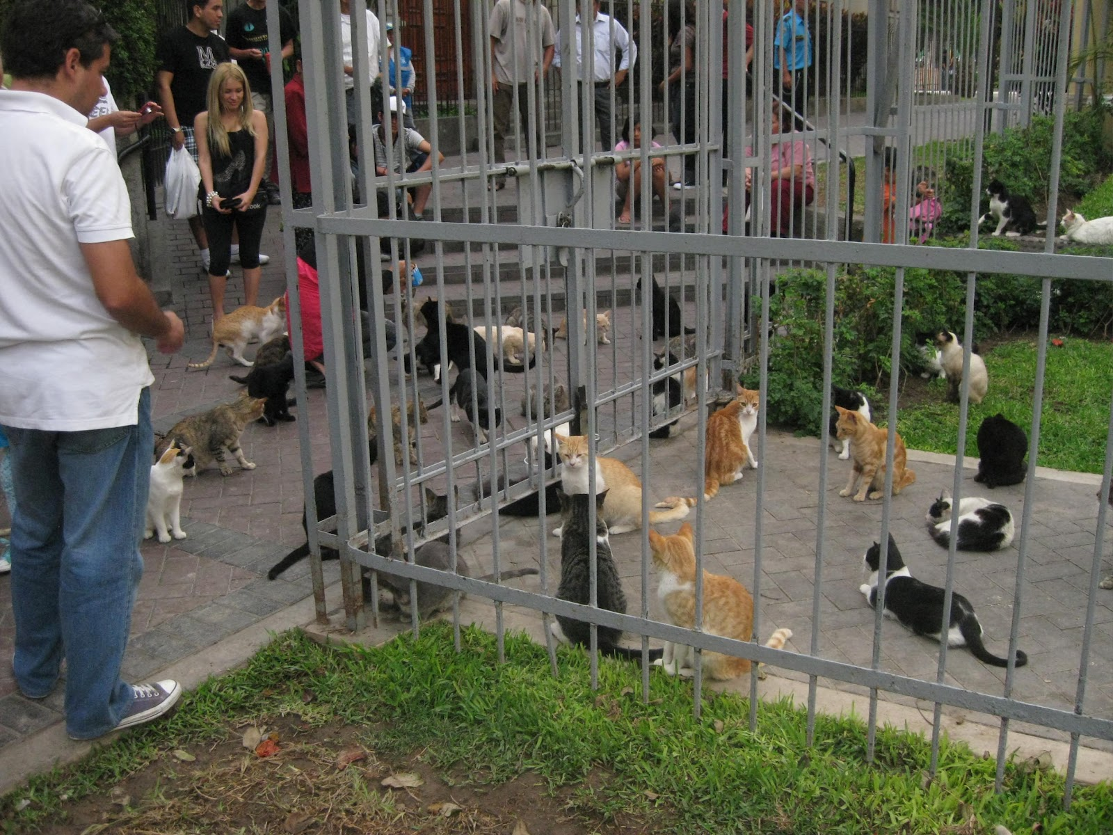El jard n de isula los gatos del parque kenedy for Ahuyentar los gatos del jardin