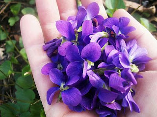 Flores, Fotos de Violetas, parte 2